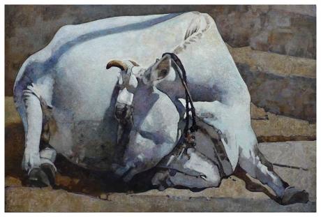 dartnell-Nic-White-Cow.jpg