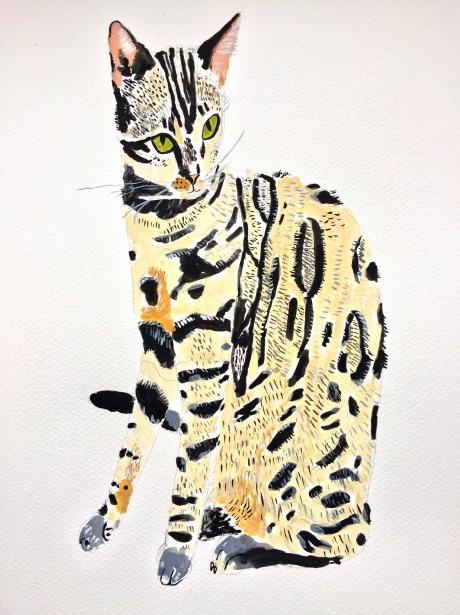 Rihanah Hussain Bengal Cat