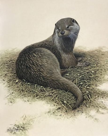 Simon-Turvey-Otter.jpg