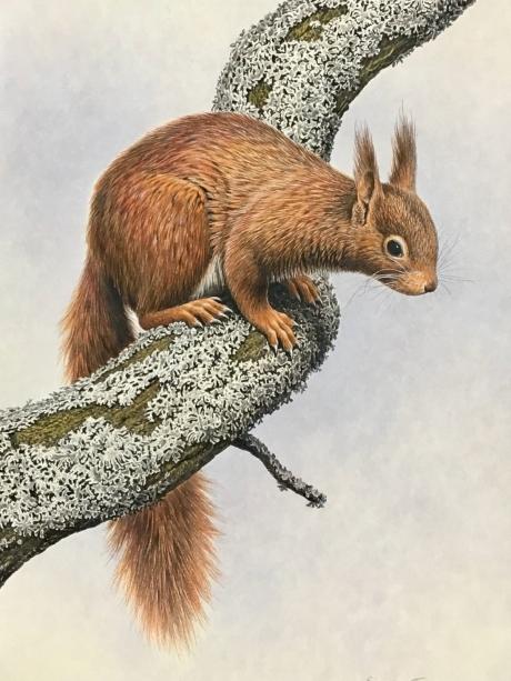 Simon-Turvey-Red-Squirrel.jpg
