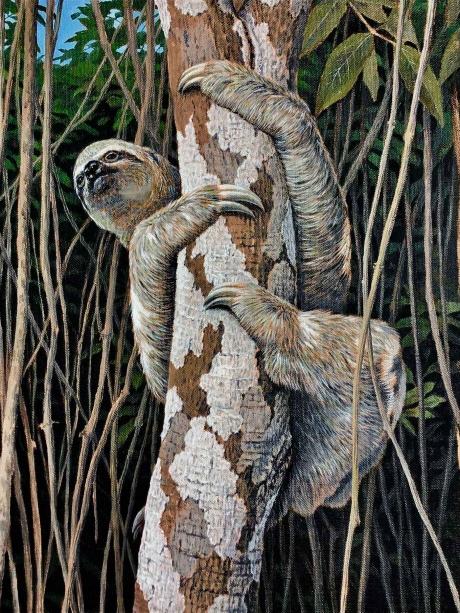 Turvey-Simon-Sloth-Amazon-WEB.jpg