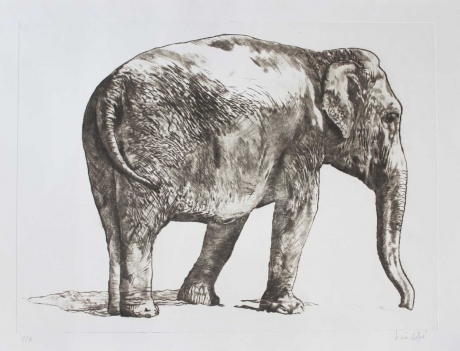 """Elephant"" Drypoint engraving by Lucie Geffré"