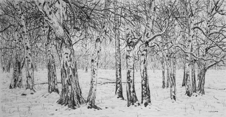 'Winter Silver Birches' charcoal sketch by Roy Wright